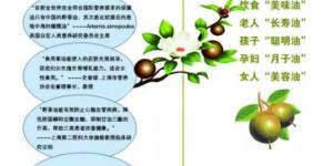 山茶油能患阿尔茨海默症?看专家解读插图