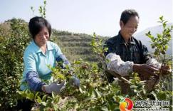 赣州油茶林总面积达288万亩 油茶综合产值达84亿元插图