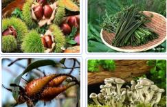 野生茶油真的比人工种植的好吗?插图