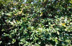 茶油树种植技术,本教程适合湖南地区插图