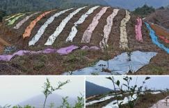 油茶林科学除草 可以试试这几种方法插图