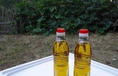 广西博白:出台政策发展油茶产业插图