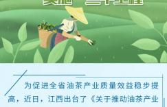 """""""江西油茶""""!这个给奖励给补贴的政策,千万别错过!插图"""